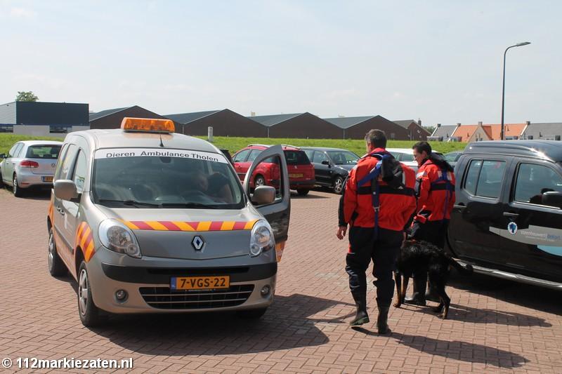 Brandweer redt hond van zandplaat bij Sint-Annaland