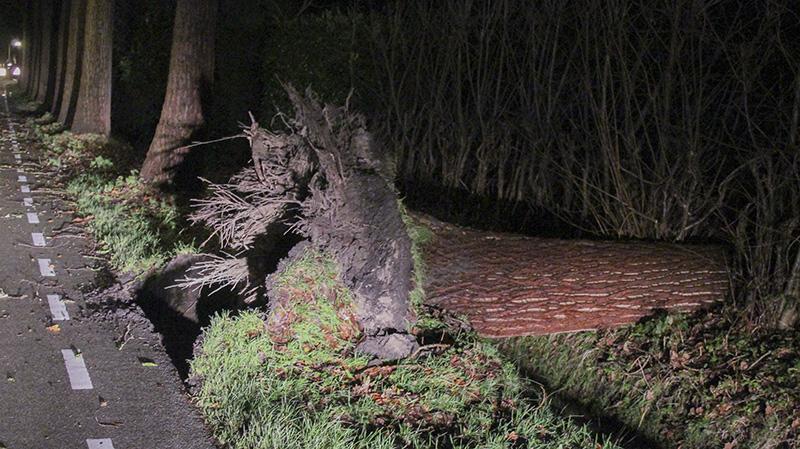 Code oranje vanwege zware windstoten in Zuidwest Nederland