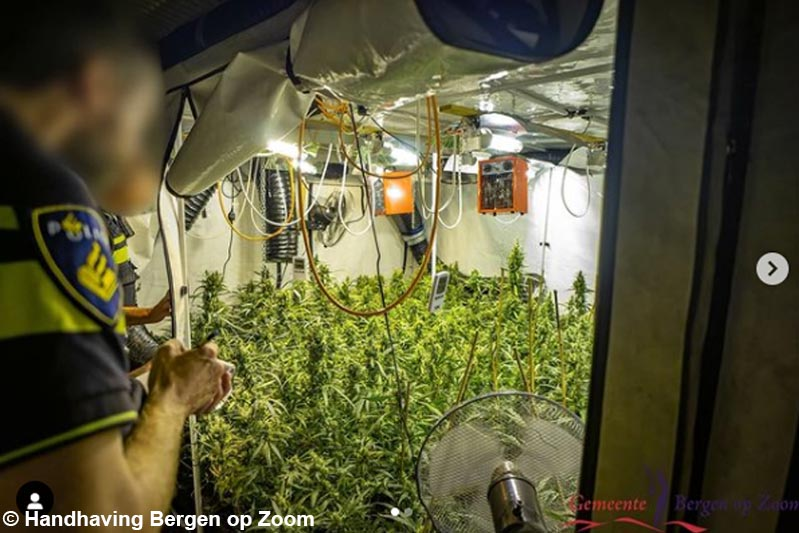Politie ruimt op vier locaties hennepkwekerijen